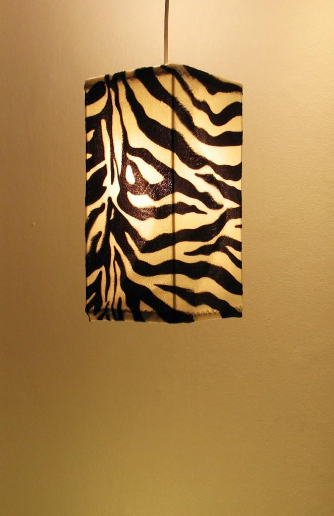lo_zebra_fir_on