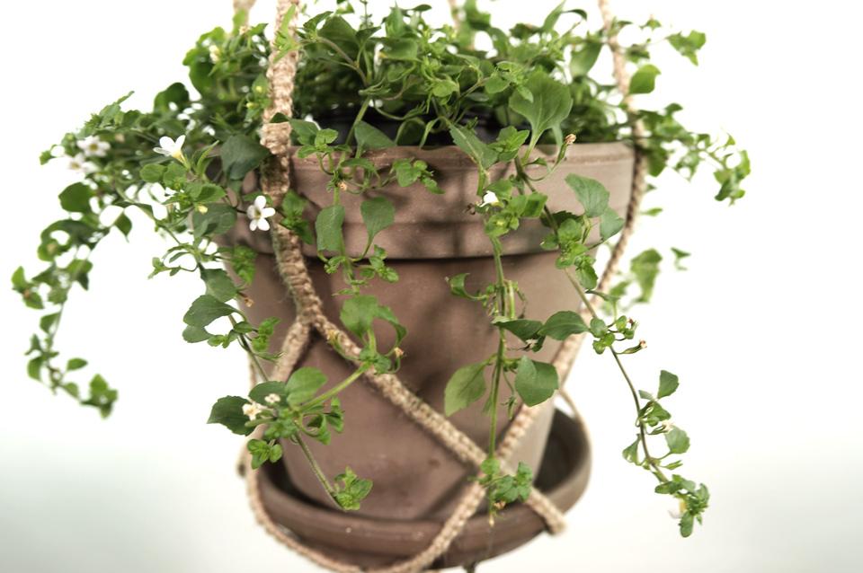 plant_1_mid_natur_3