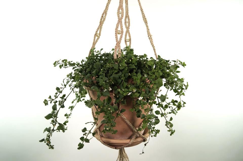 plant_1_mid_natur_5
