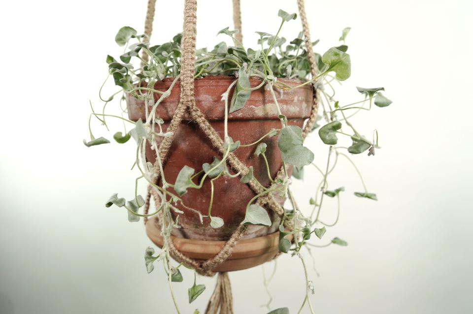 plant_1_mid_natur_6