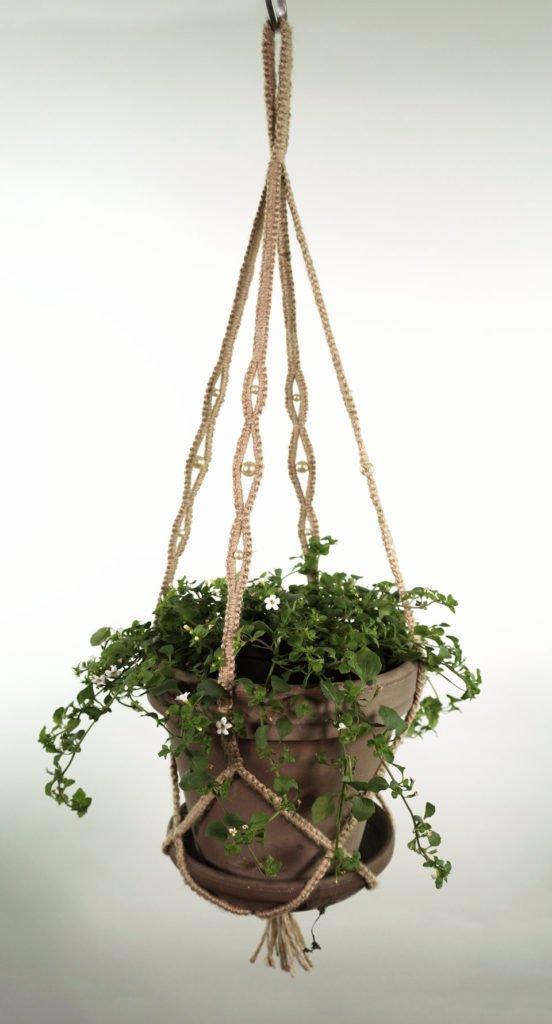 plant_1_natur_1