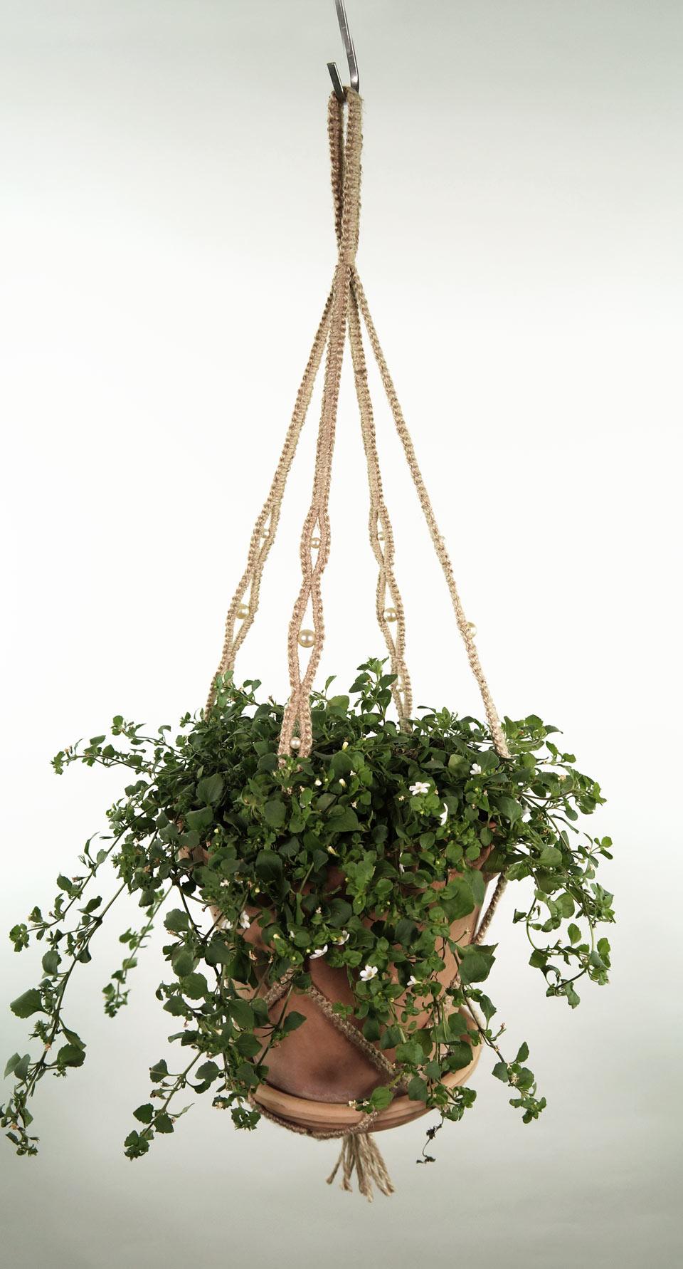 plant_1_natur_2