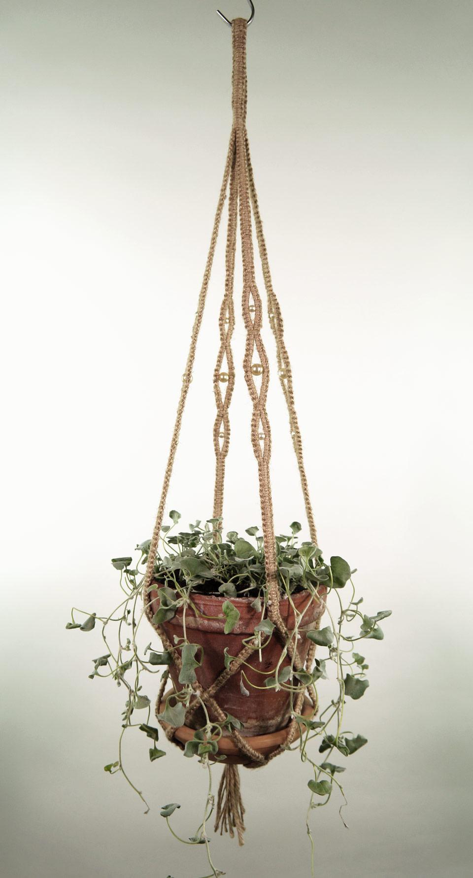 plant_1_natur_3
