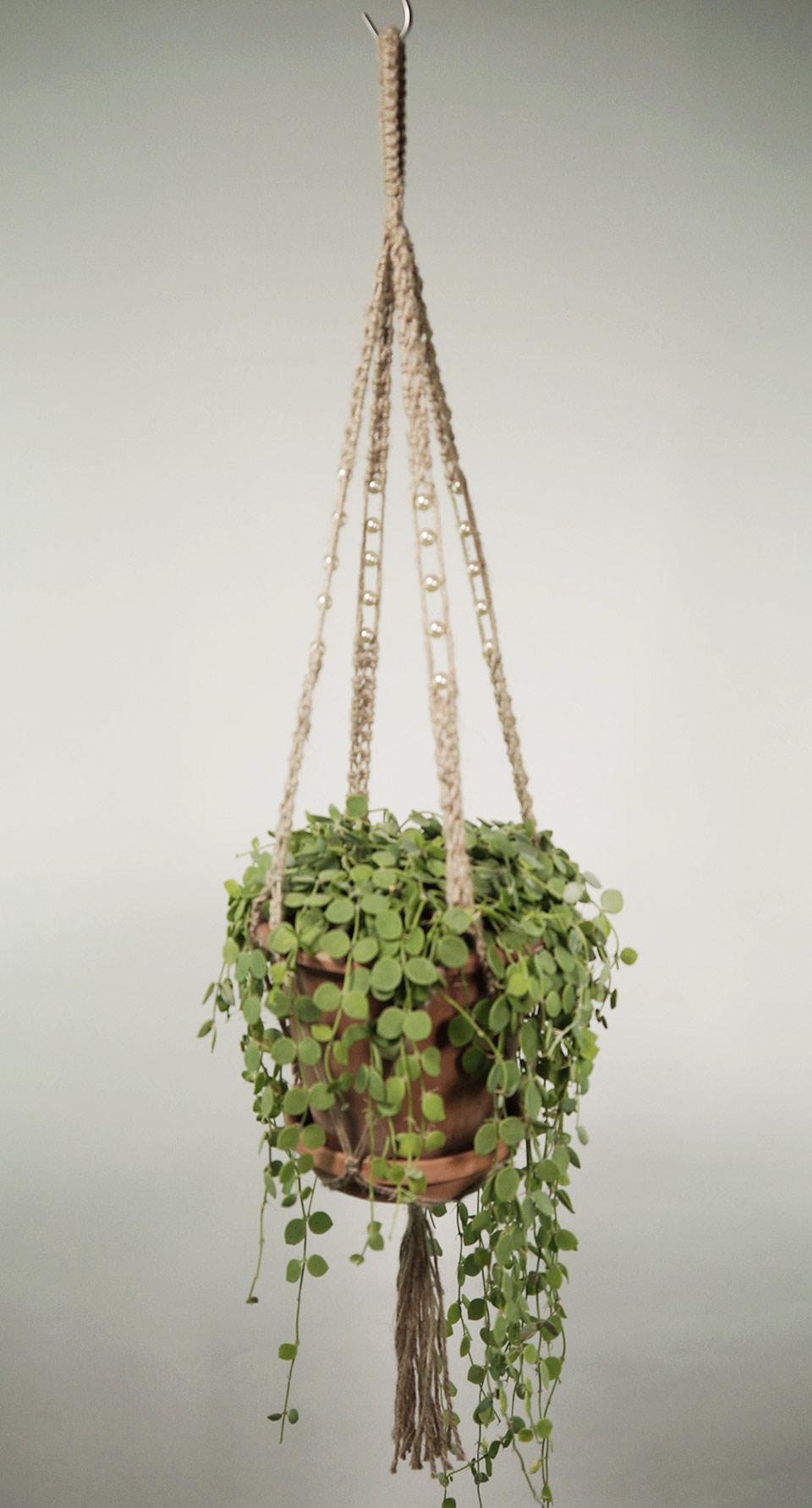 plant_2a_natur_1