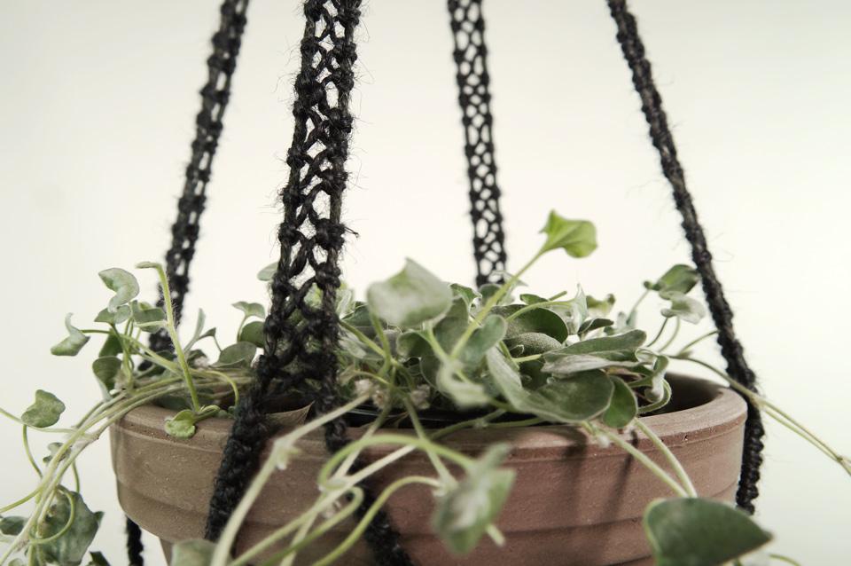 plant_2b_mid_sort_3