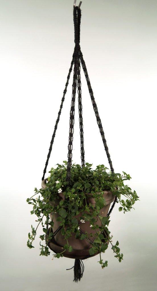 plant_3_sort_1