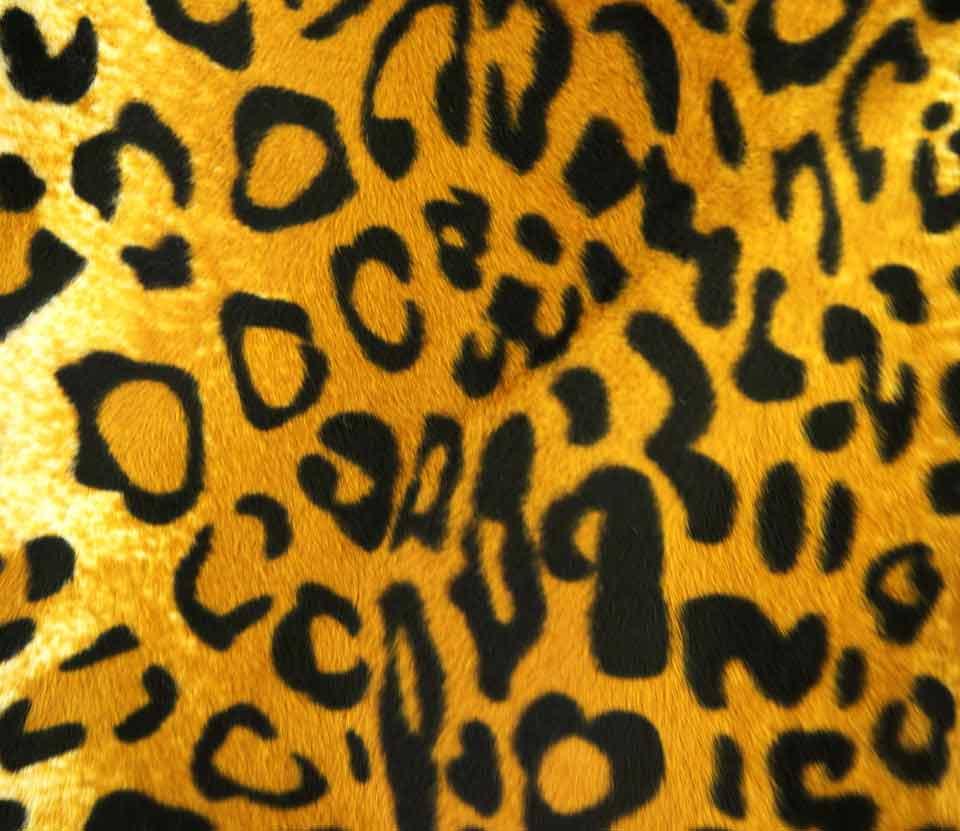 leopard_1.2
