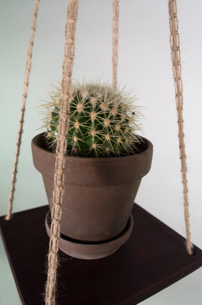 Hængende hylde med kaktus